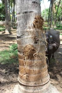 Saani packed on a tree