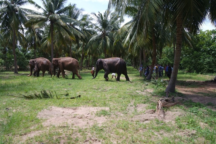 STEM MBA students watch the elephants leave their exercise area to head back to the center.